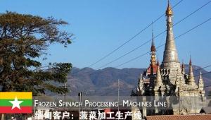 东南亚客户:时产1T的菠菜速冻生产线