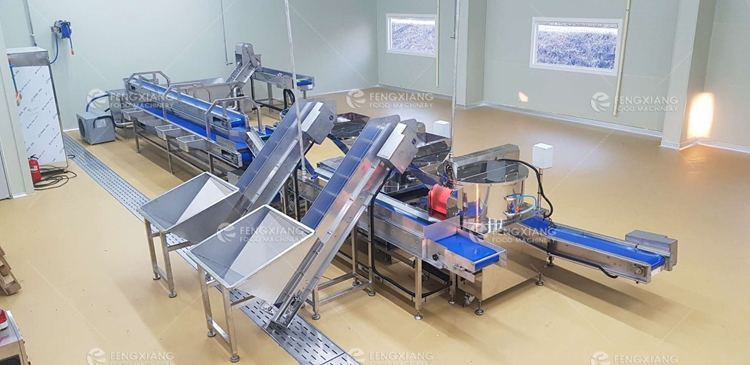 potato peeler and washing production line