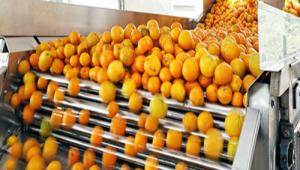 告别产品单一化,水果自动分选设备助力生产企业进入食品多元化市场