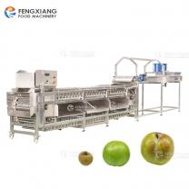 凤翔 土豆洋葱桃子水果分选分级线