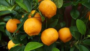 柑橘深加工,就这么简单!